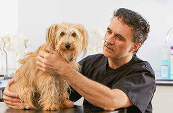 Supervet on cheap pet insurance