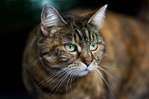 Petplan reveals the truth behind common cat myths