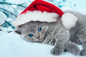 Christmas Gift Ideas For Your Pet | Pet Tips The best presents, advice and things to do with your pet at Christmas Advice