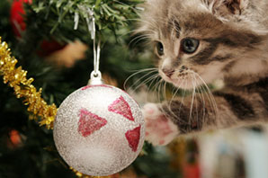 The 12 tips for Christmas with your pet