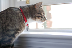 Debate: should cats be kept indoors?
