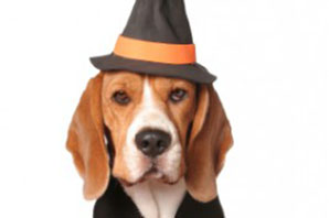 How to have a safe Halloween with your dog or cat