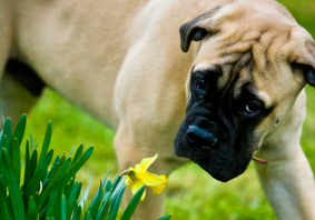 Springtime dangers for pets: what you need to know