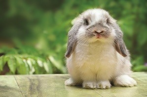 Rabbit eye health - how to look after your bunny's eyes