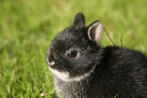 Things To Know About Netherland Dwarf Rabbit