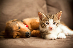 How to prepare your home for a new pet