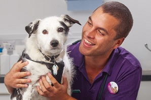 Nominate now for the 2014 Petplan Veterinary Awards