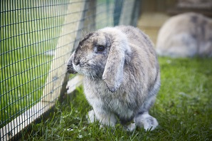 Tips On What Your Rabbits Can Eat | Rabbit Care