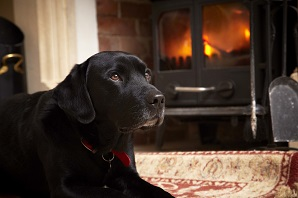 How to keep your pets safe and healthy during autumn