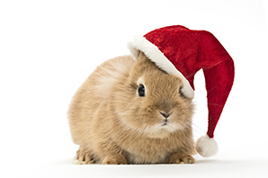 Stories from the surgery: keeping your pets safe from Christmas hazards