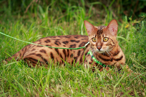 Cool cats: How to regulate your cat's temperature in the summer