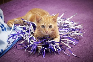 A ginger cat lying on tinsel