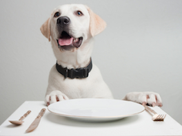 How to make a tasty Christmas dinner for your dog