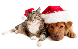 Five perfect Christmas gifts for your pet