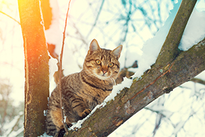 Winter Cat Advice - How to Care for Cats in Cold Weather