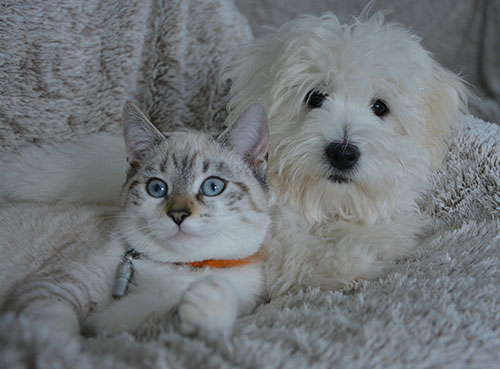 Caring for your pet during the Coronavirus Outbreak