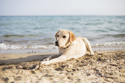 Dog-friendly places to go in summer