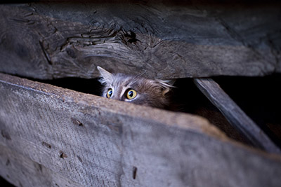 Stray vs. Feral Cats: How to Spot the Difference
