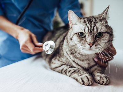Your Pet's Vet Visit: How to Keep Them Calm
