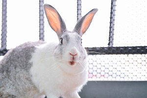 What to Do If Your Rabbit Has Overgrown Teeth