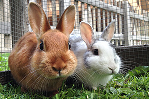 Top 3 Myths and Facts about Rabbits