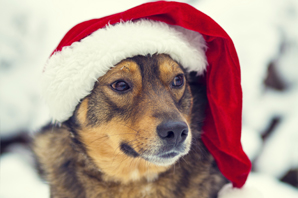 Pet Christmas presents: safe and healthy treats for your cats, dogs and rabbits
