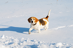 Pet Winter Safety Checklist: dogs, cats and smaller pets