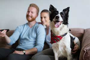Petplan's favourite dogs in the spotlight