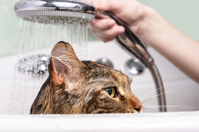 How to bathe a cat