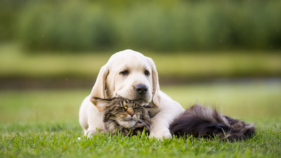 How to help your pets get along