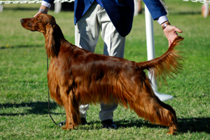 The owner's essential guide to pet shows