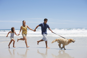 How to have a safe holiday with pets