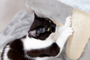 How to stop cats scratching furniture
