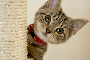 What's the most common name for a cat insured by Petplan?