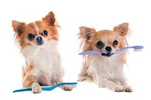 Brushing your pet's teeth – what to remember