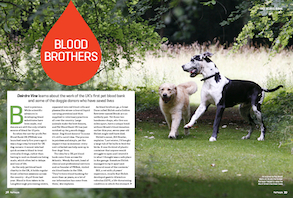 How Pet Blood Bank UK is saving dogs' lives