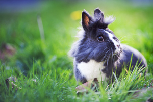 A Guide to Rabbit Pregnancy