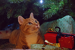 10 Perfect Cat Christmas Presents