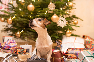 10 Christmas Presents Your Dog Will Love