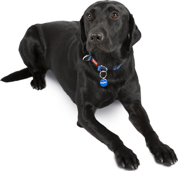 How to Keep Your Labrador's Skin and Coat Healthy The
