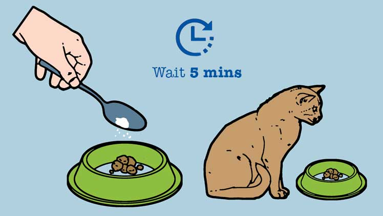 Mixing Liquid Cat Medicine With Food