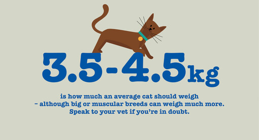 Obese and overweight cats - How to help a cat lose weight