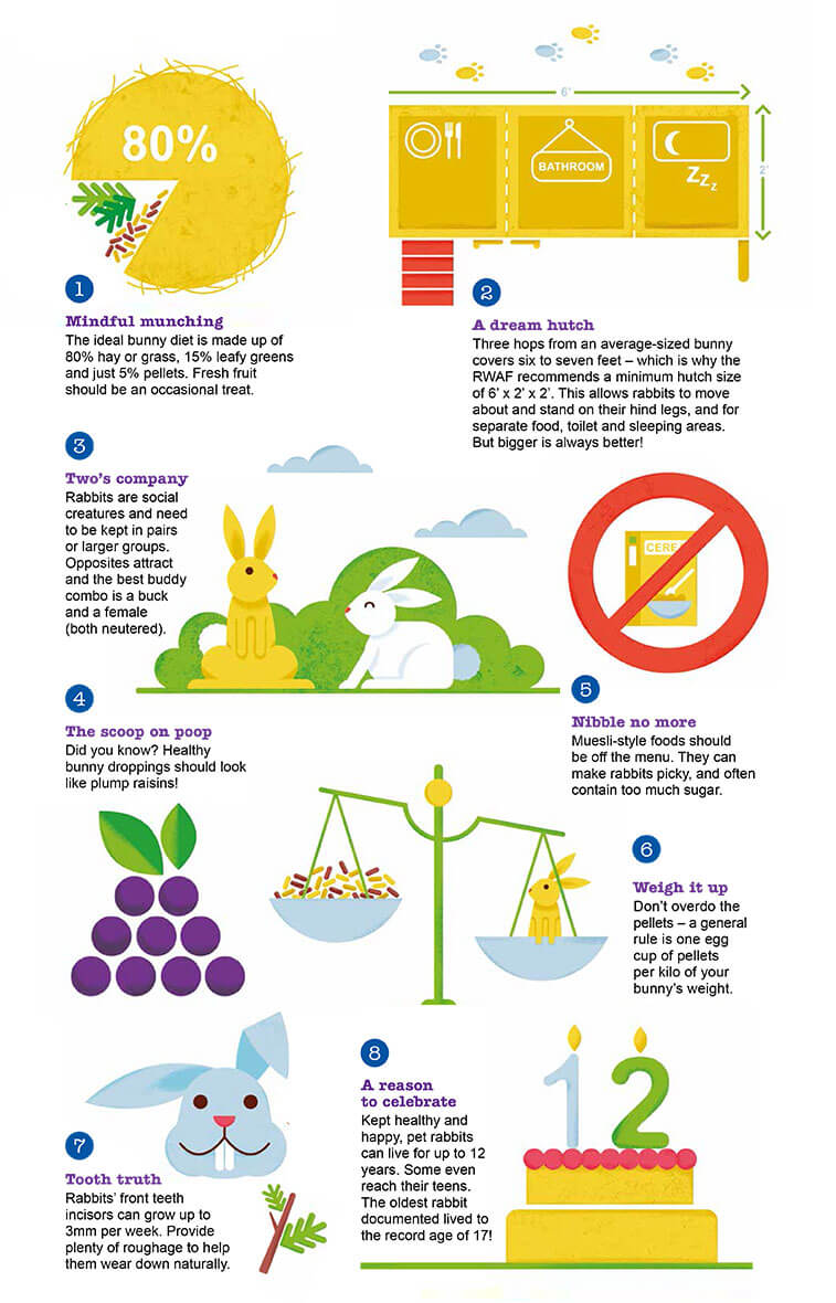 what´s up doc infographic