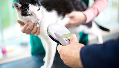 microchip tag tagging