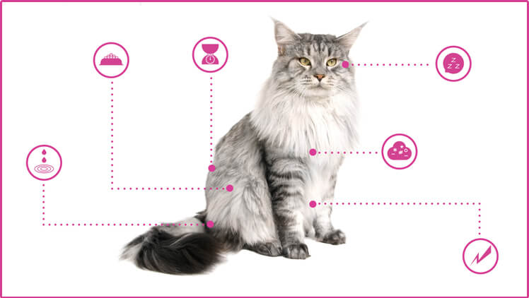 Open Petplan's Guide To Your Cat's Health
