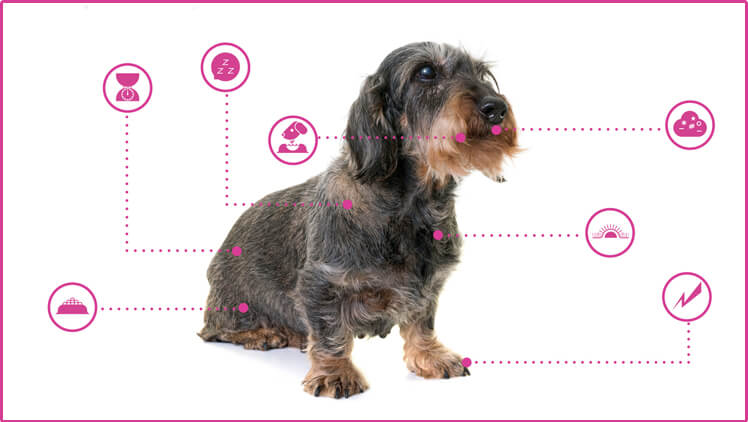 Open Petplan's Guide To Your Dog's Health