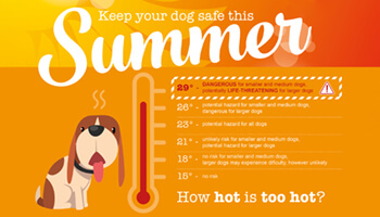 Image for: Dog Summer Safety
