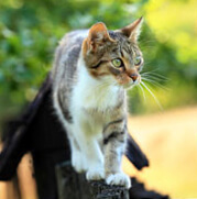 cat care risks hazards outdoors