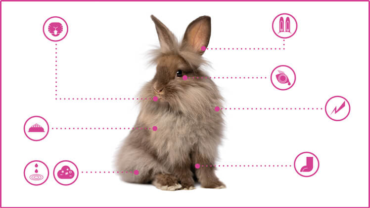 Open Petplan's pet guide on keeping a healthy rabbit